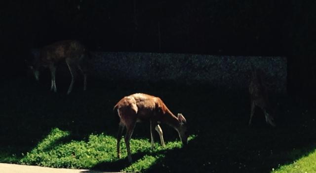 3-deer.jpg